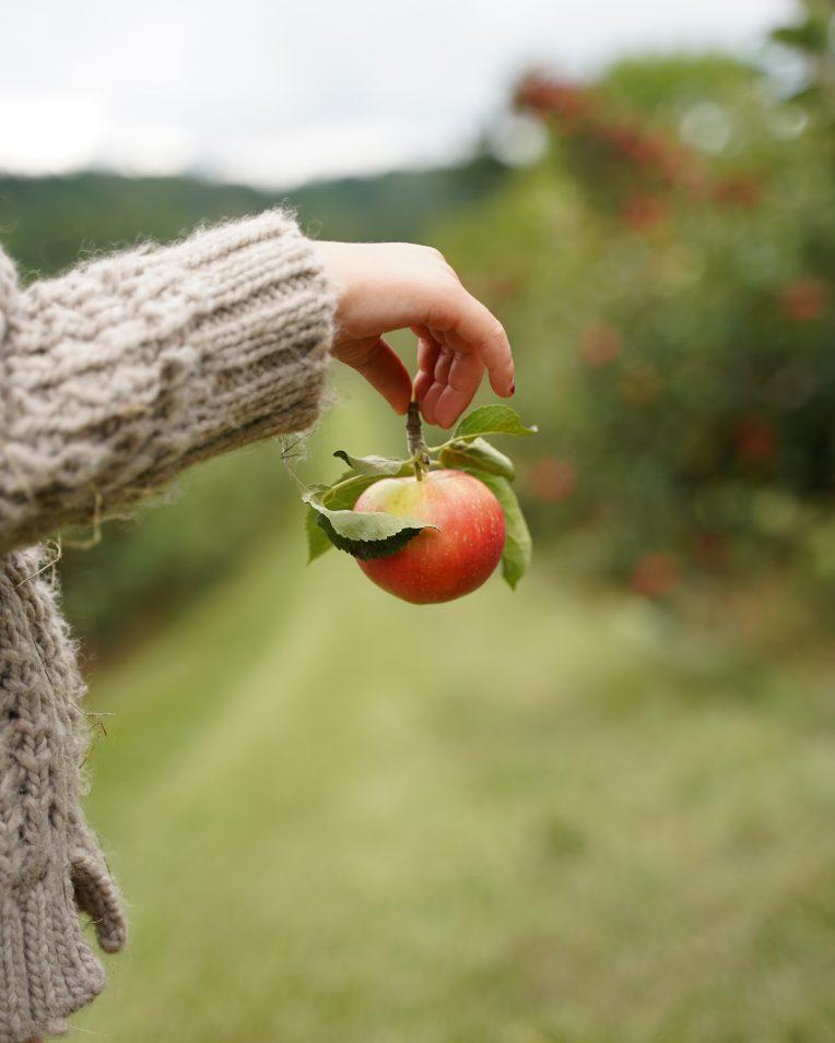 Sortbestäm dina Äpplen